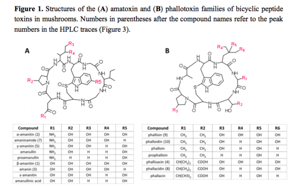 Amatoxins and Phallotoxins, from Sgambelluri et al 2014
